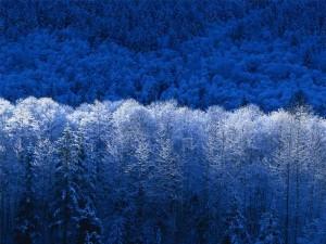 hiver  dans le Lagast